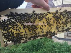 Мёд акациевый, горный, донниковый, луговое разнотравье